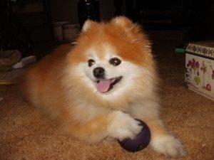 Tia's Purple Ball